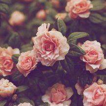 cropped-vintage-floral-wallpaper-hd-vintage-wallpaper-theme.jpg