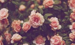 cropped-vintage-floral-wallpaper-hd-vintage-wallpaper-theme.jpg